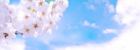 桜の時期。サクラの和歌とラオウと