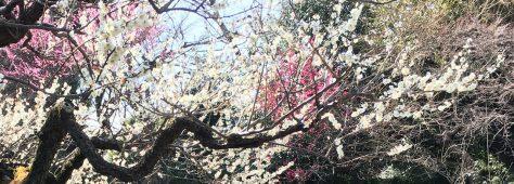 梅も祝福♡ご家族とのあったかウェディング